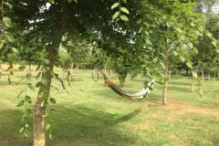 Hamac dans le jardin arboré de la Tiny House